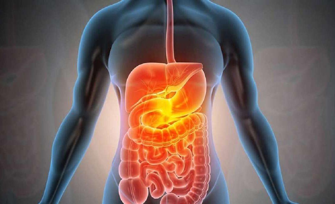 sistem pencernaan tubuh manusia